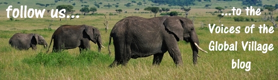 "wide angle image of three African elephants walking left to right with the message ""follow us to the blog"""